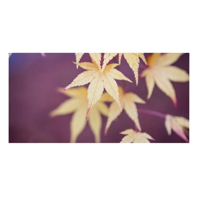 Leinwandbild - Herbstlicher Ahorn - Querformat 2:1