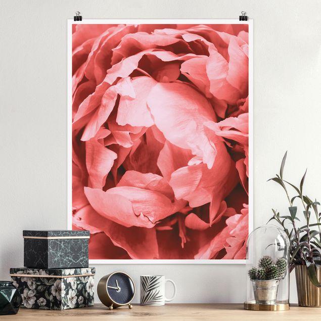 Poster - Pfingstrose Blüte Koralle - Hochformat 4:3