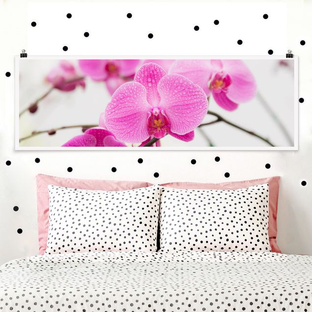 Poster - Nahaufnahme Orchidee - Panorama Querformat