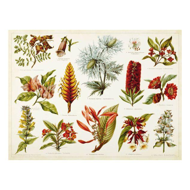 Glas Spritzschutz - Vintage Lehrtafel Tropische Botanik I - Querformat - 4:3