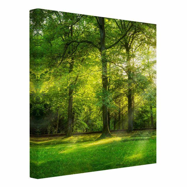 Leinwandbild - Spaziergang im Wald - Quadrat 1:1
