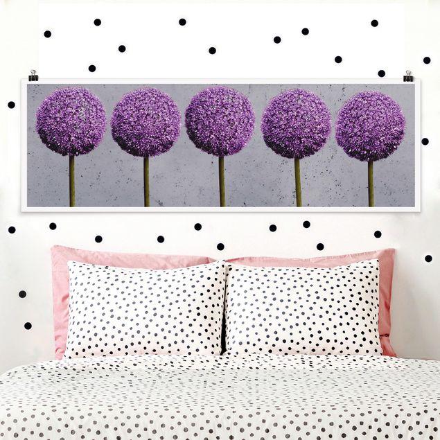 Poster - Allium Kugel-Blüten - Panorama Querformat