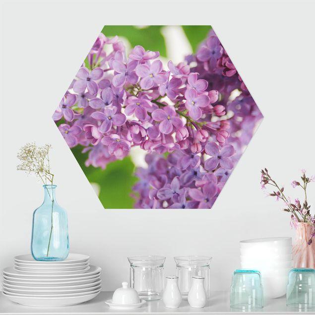 Hexagon Bild Forex - Lovely Lilac