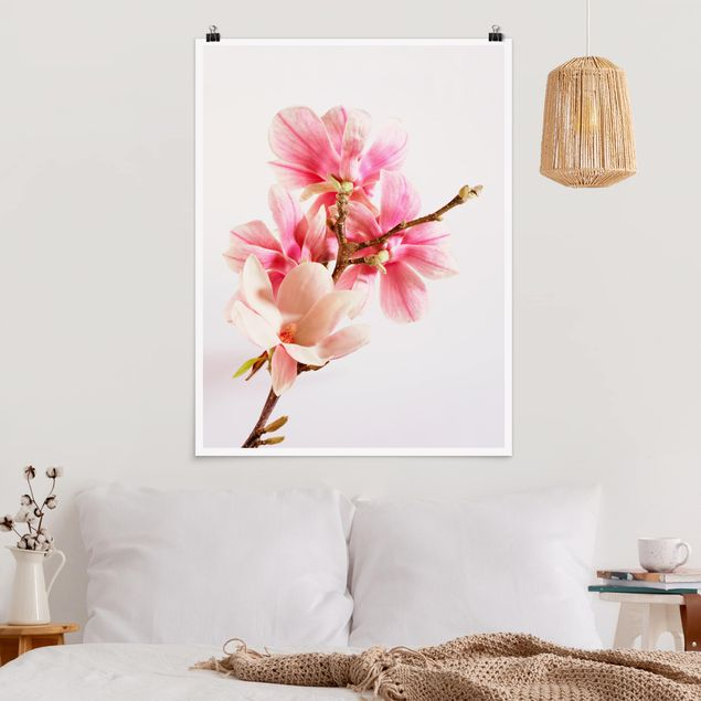 Poster - Magnolienblüten - Hochformat 3:4