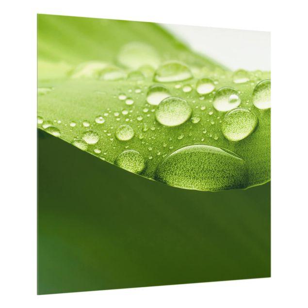 Glas Spritzschutz - Drops of Nature - Quadrat - 1:1
