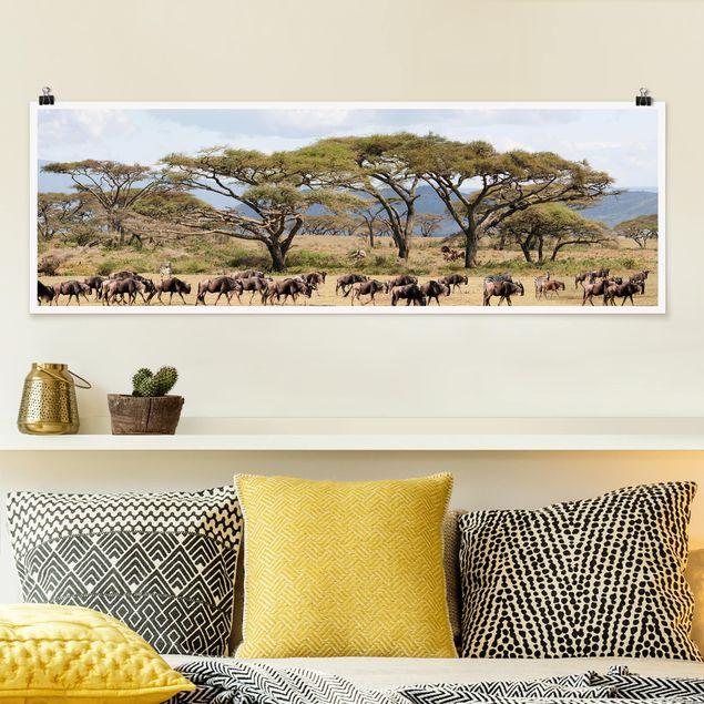 Poster - Gnuherde in der Savanne - Panorama Querformat