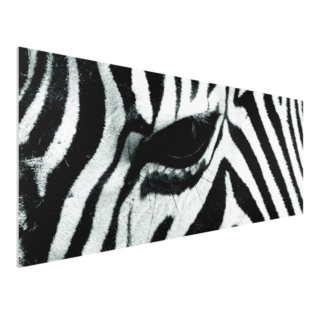 Forexbild - Zebra Crossing No.2