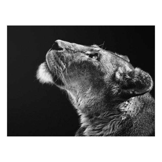 Forex Fine Art Print - Portrait einer Löwin - Querformat 3:4