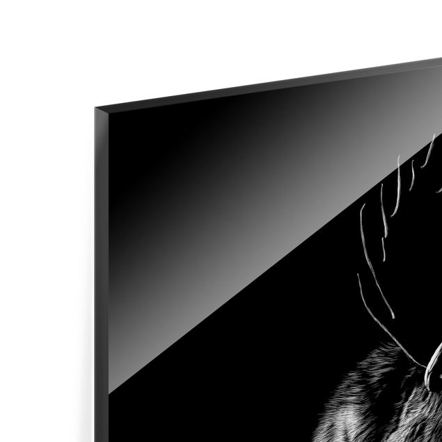 Glas Spritzschutz - Bulle vor Schwarz - Querformat - 4:3