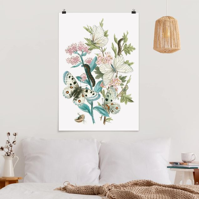 Poster - Britische Schmetterlinge I - Hochformat 3:2