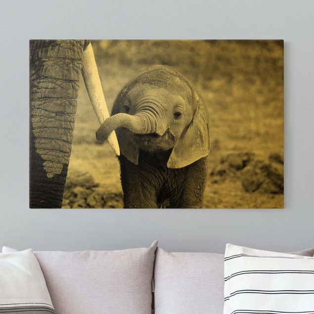 Leinwandbild Gold - Elefantenbaby - Querformat 3:2