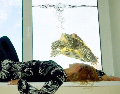 Fensterfolie - Sichtschutz Fenster Turtle - Fensterbilder