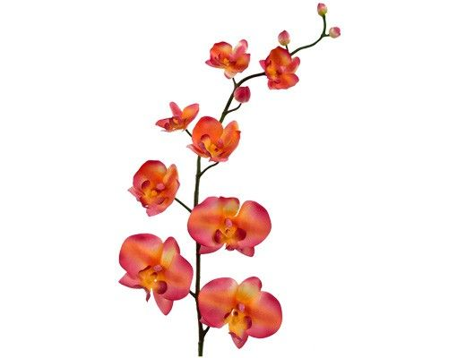 Wandtattoo Orchidee No.185 Orchidee orange