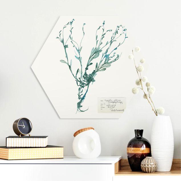 Hexagon Bild Forex - Gepresste Blumen - Vergissmeinnicht