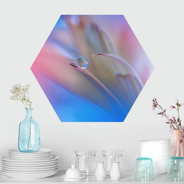 Hexagon Bild Forex - Touch Me Softly
