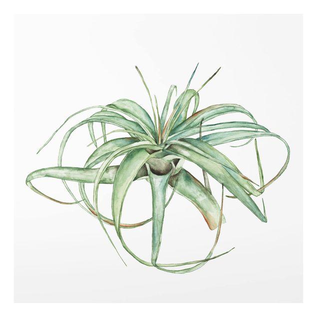 Glas Spritzschutz - Luftpflanze Aquarell I - Quadrat - 1:1