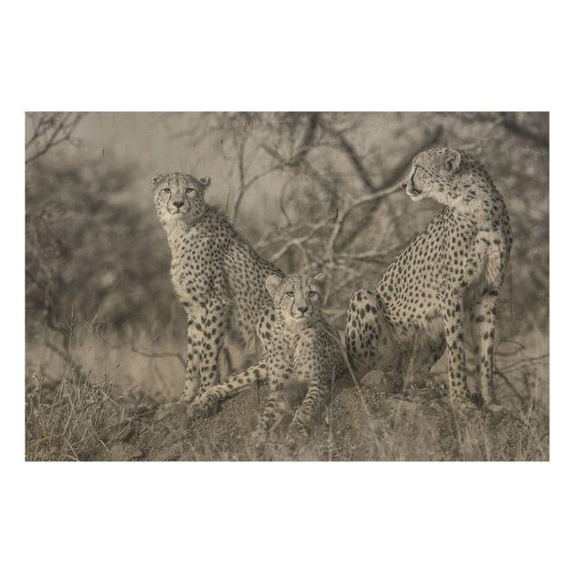 Holzbild - Drei Geparden - Querformat 2:3