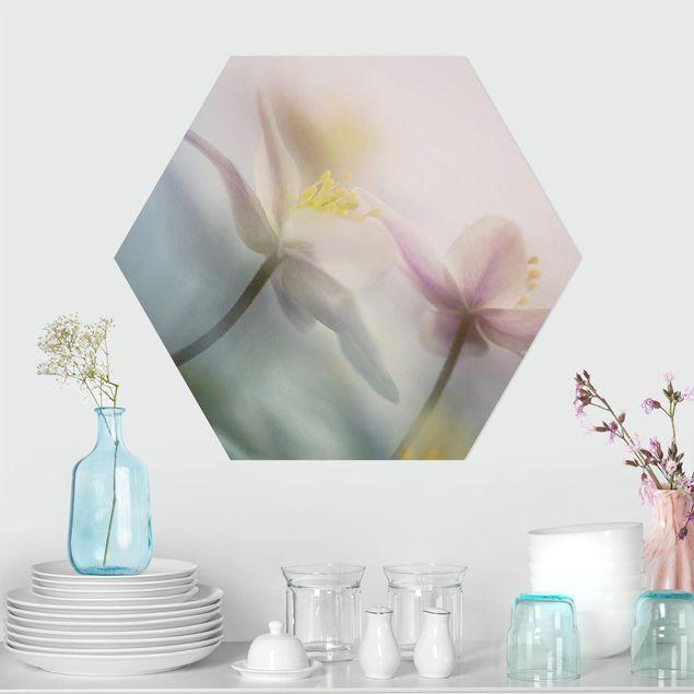 Hexagon Bild Forex - Buschwindröschen