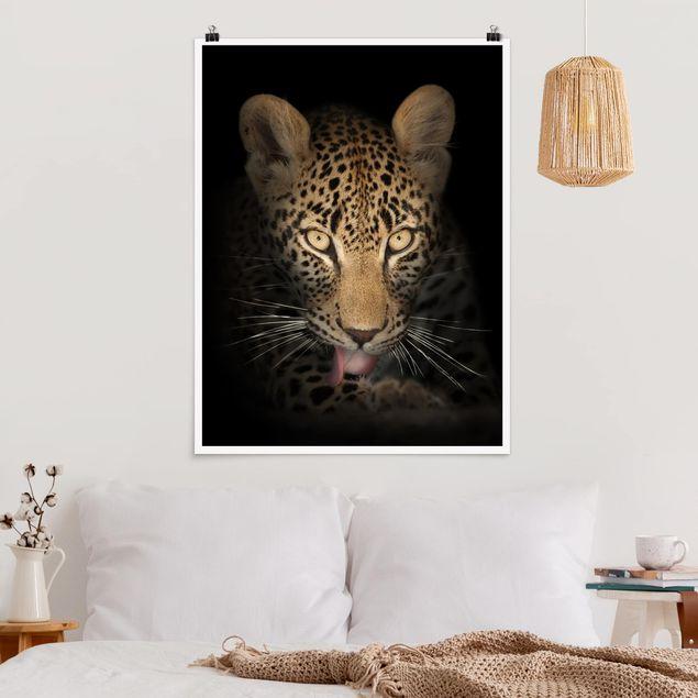 Poster - Resting Leopard - Hochformat 3:4