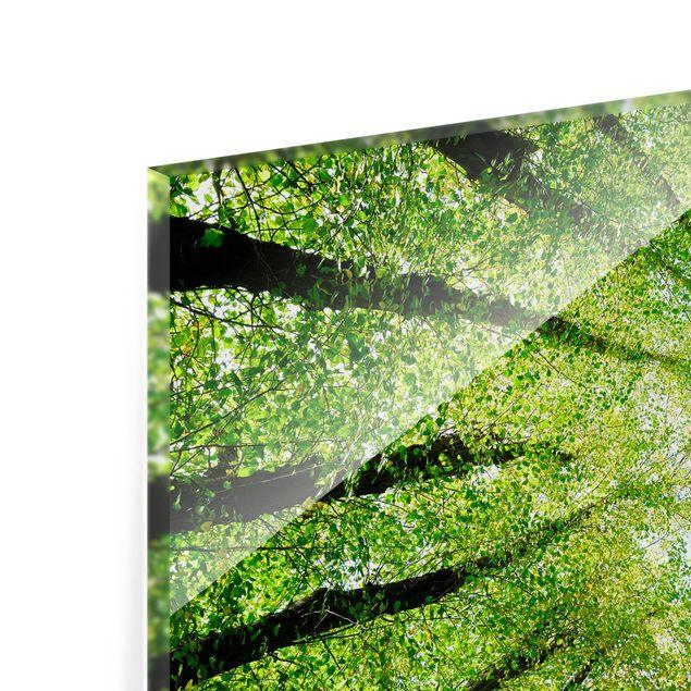 Glas Spritzschutz - Bäume des Lebens - Querformat - 4:3