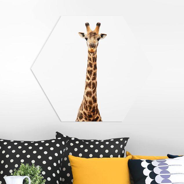 Hexagon Bild Forex - Giraffenkopf
