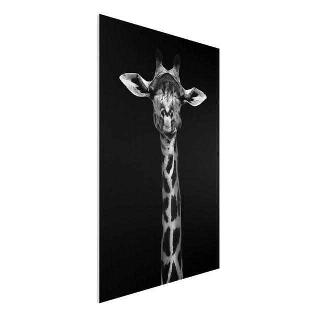 Forex Fine Art Print - Dunkles Giraffen Portrait - Hochformat 3:2