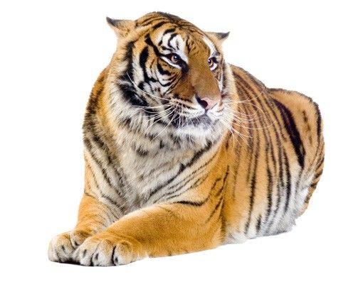 Fensterfolie - Fenstersticker No.95 Tiger Tigris - Fensterbilder