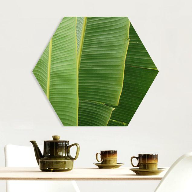 Hexagon Bild Forex - Banana Leaves