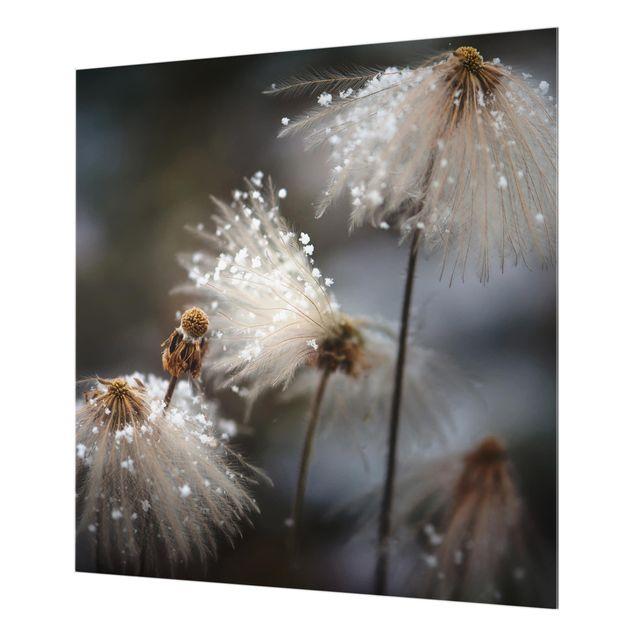 Glas Spritzschutz - Pusteblumen mit Schneeflocken - Quadrat - 1:1