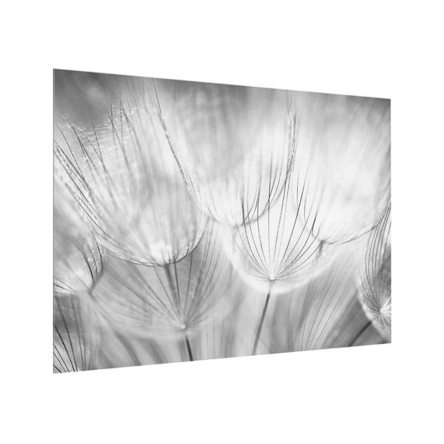 Glas Spritzschutz - Pusteblumen Makroaufnahme in schwarz weiß - Querformat - 4:3