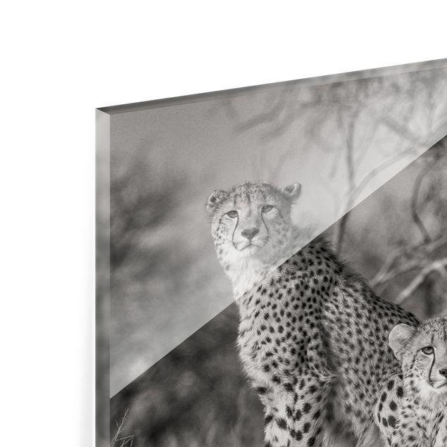 Glas Spritzschutz - Drei Geparden - Querformat - 4:3
