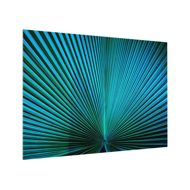 Glas Spritzschutz - Tropische Pflanzen Palmenblatt in Türkis II - Querformat - 4:3