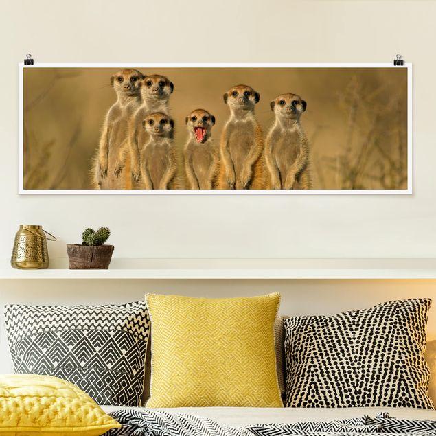 Poster - Meerkat Family - Panorama Querformat