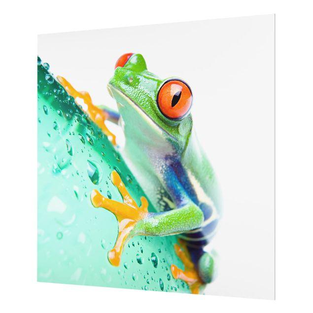 Glas Spritzschutz - Frog - Quadrat - 1:1