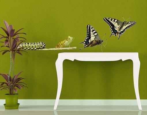 Wandtattoo Schmetterling No.422 Metamorphose