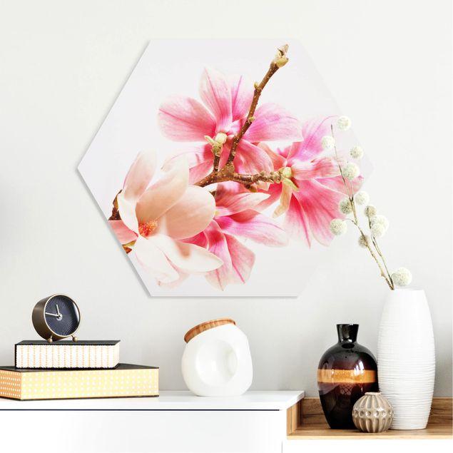 Hexagon Bild Forex - Magnolienblüten