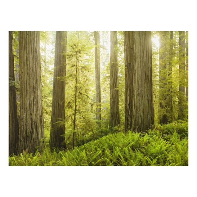 Glas Spritzschutz - Redwood State Park Waldblick - Querformat - 4:3
