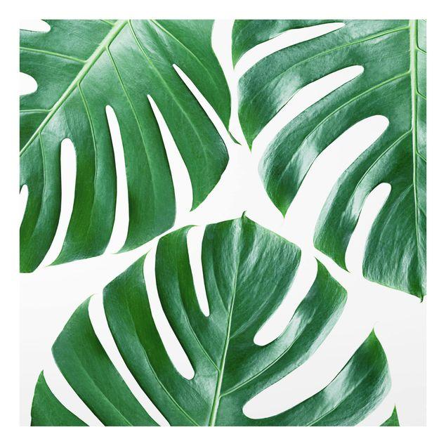 Glas Spritzschutz - Tropische grüne Blätter Monstera - Quadrat - 1:1