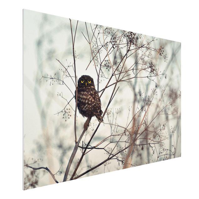 Forex Fine Art Print - Eule im Winter - Querformat 2:3