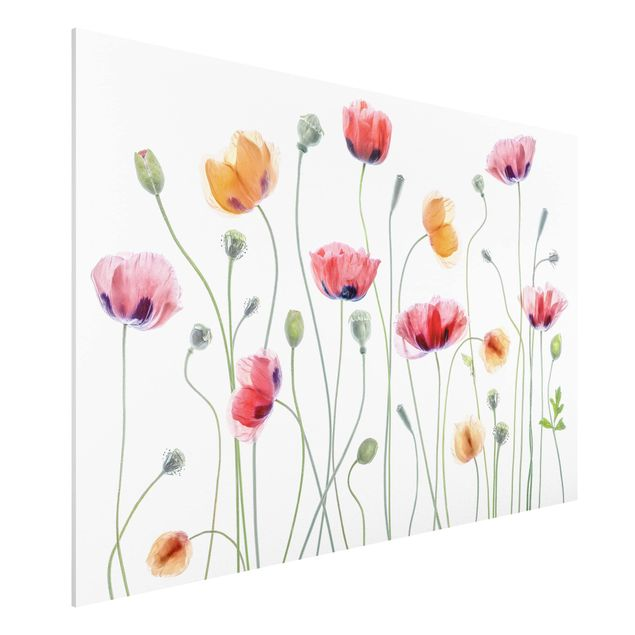 Forex Fine Art Print - Klatschmohn Party - Querformat 2:3