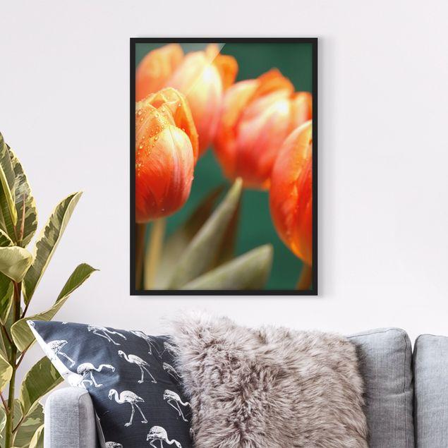 Bild mit Rahmen - Shiny Orange Tulips - Hochformat 3:4