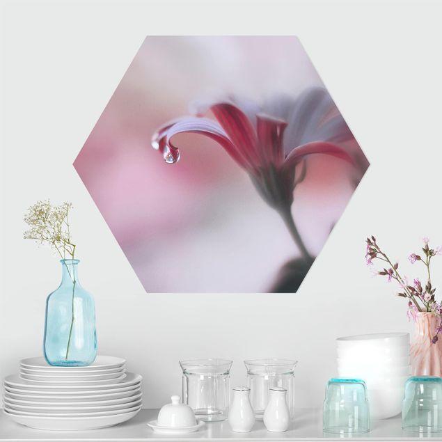 Hexagon Bild Alu-Dibond - Invisible Touch