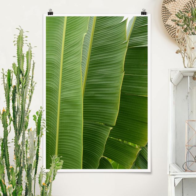 Poster - Banana Leaves - Hochformat 3:2
