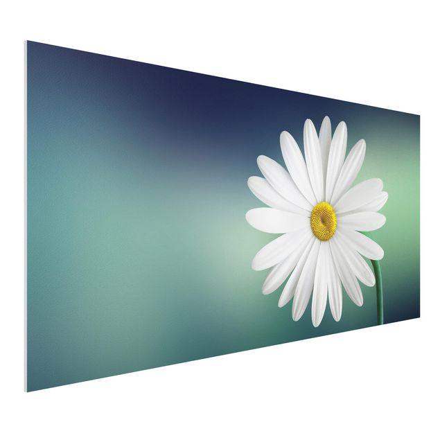 Forex Fine Art Print - Gänseblümchen Close Up - Querformat 1:2