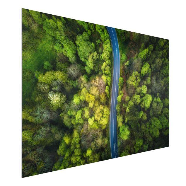 Forex Fine Art Print - Luftbild - Asphaltstraße im Wald - Querformat 2:3