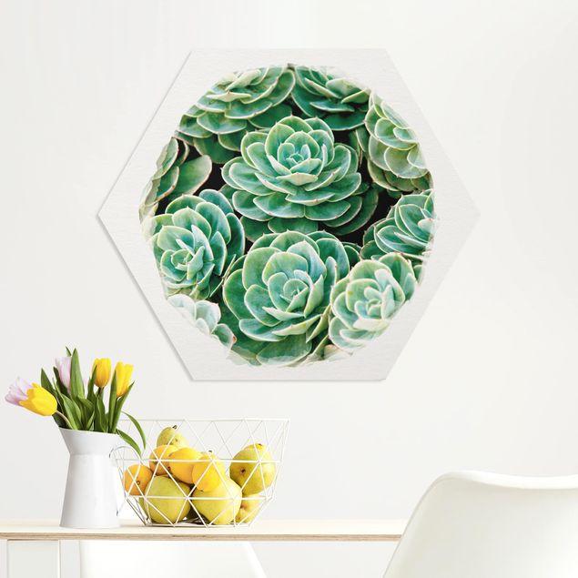 Hexagon Bild Forex - Wasserfarben - Grüne Sukkulenten