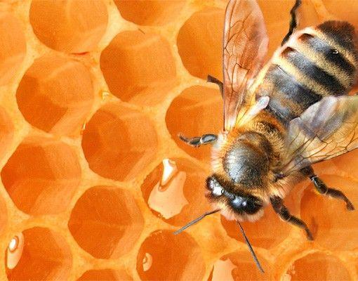 Fensterfolie - XXL Fensterbild Honey Bee - Fenster Sichtschutz