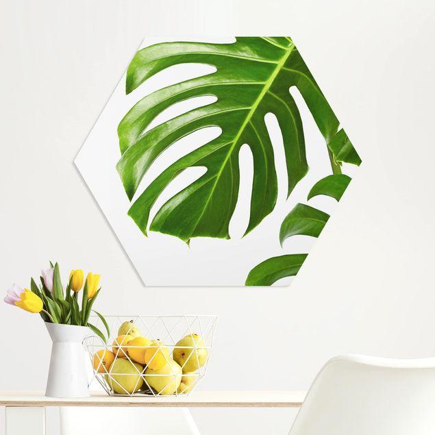 Hexagon Bild Forex - Grüne Blätter Monstera