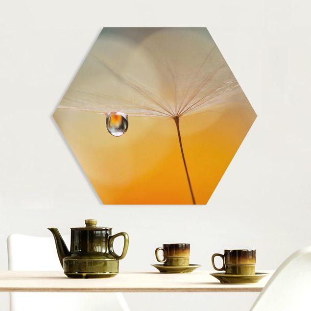 Hexagon Bild Forex - Pusteblume in Orange