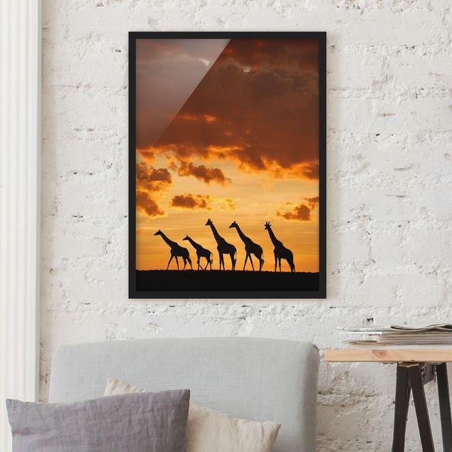 Bild mit Rahmen - Fünf Giraffen - Hochformat 3:4